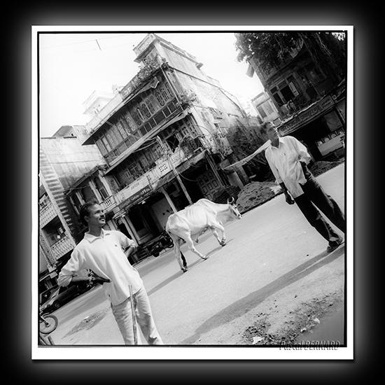 2006 inde 009