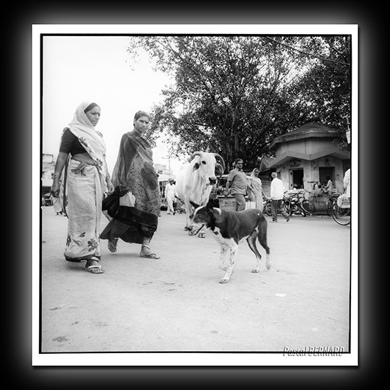 2006 inde 019