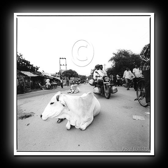 2011 inde 004